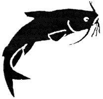 catfish2.jpg